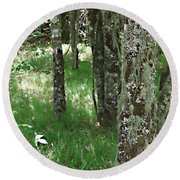 Round Beach Towel featuring the photograph Soft Trees by Shari Jardina