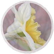Round Beach Towel featuring the photograph Softness Of A Daffodil Flower by Jennie Marie Schell
