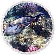 Sohal Surgeonfish 5 Round Beach Towel