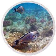 Sohal Surgeonfish Round Beach Towel