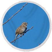 Song Sparrow Round Beach Towel by Michael Peychich
