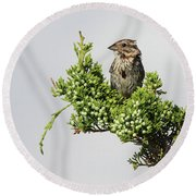Song Sparrow Port Jefferson New York Round Beach Towel