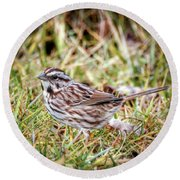 Round Beach Towel featuring the photograph Song Sparrow Sweetie by Kerri Farley