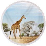 South African Giraffe Round Beach Towel