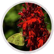 Southern Dogface On Cardinal Flower Round Beach Towel by Barbara Bowen