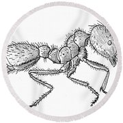 Southern Fire Ant Round Beach Towel