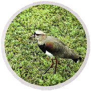 Southern Lapwing Round Beach Towel by Norman Johnson