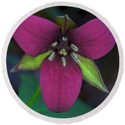 Southern Red Trillium Round Beach Towel by Barbara Bowen