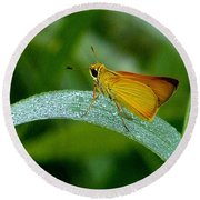 Round Beach Towel featuring the photograph Southern Skipperling Butterfly  000 by Chris Mercer