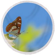 Southern White Admiral - Limenitis Reducta Round Beach Towel