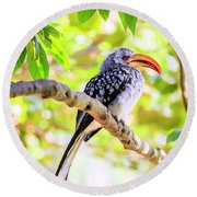 Round Beach Towel featuring the photograph Southern Yellow Billed Hornbill by Alexey Stiop
