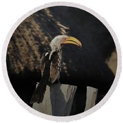 Southern Yellow Billed Hornbill Round Beach Towel by Ernie Echols