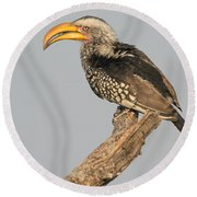 Southern Yellow-billed Hornbill Tockus Round Beach Towel by Panoramic Images
