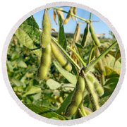 Soybeans In Autumn Round Beach Towel