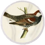 Spanish Sparrow Round Beach Towel by English School
