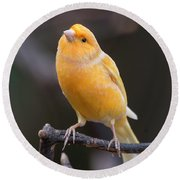 Spanish Timbrado Canary Round Beach Towel