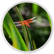Sparkling Red Dragonfly Round Beach Towel