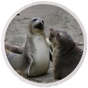Sparring Seals  Round Beach Towel