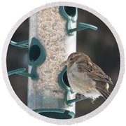 Sparrow And Seed Round Beach Towel