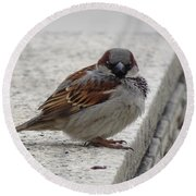 Round Beach Towel featuring the photograph Sparrow by Angela DeFrias