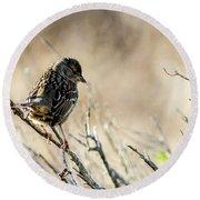 Snarky Sparrow Round Beach Towel