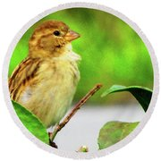Sparrow In Green Round Beach Towel