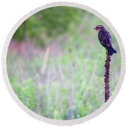 Sparrow On The Peak Field Round Beach Towel