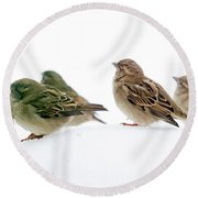 Sparrows In The Snow Round Beach Towel