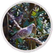 Round Beach Towel featuring the photograph Speckle Pigeon by Donna Brown