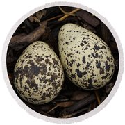 Speckled Killdeer Eggs By Jean Noren Round Beach Towel by Jean Noren