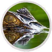 Spectacled Caiman Caiman Crocodilus Round Beach Towel by Panoramic Images