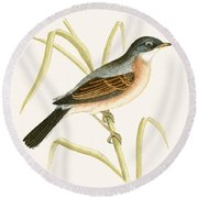 Spectacled Warbler Round Beach Towel by English School