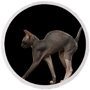 Sphynx Cat Funny Standing Isolated On Black Mirror Round Beach Towel