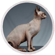 Sphynx Cat Sits And Looking Forward On Black  Round Beach Towel