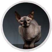Sphynx Cat Sits In Front View On Black  Round Beach Towel