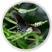 Spicebush Swallowtail Butterfly Round Beach Towel by Carol Bradley