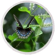 Spicebush Swallowtail On Sweet Almond Flower Round Beach Towel
