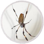 Spider In The Woods Round Beach Towel