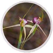 Spider Orchid Australia Round Beach Towel