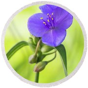 Spiderwort Wildflower Round Beach Towel