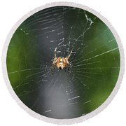 Round Beach Towel featuring the photograph Spidey by Nikki McInnes