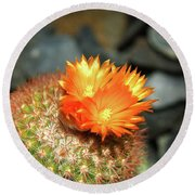 Spiky Little Cactus With Orange Flower Round Beach Towel