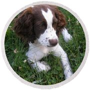 Round Beach Towel featuring the photograph Spinger Spaniel Pup by Angie Rea