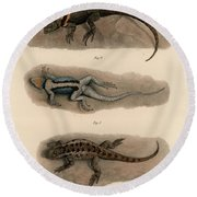Round Beach Towel featuring the drawing Spiny Lizards, Sceloporus by Carl Wilhelm Pohlke