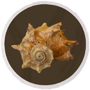 Spiral Shell Transparency Round Beach Towel