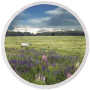 Spirit Pony In High Country Lupine Field Round Beach Towel