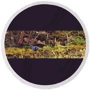 Splendid Fairy Wren Round Beach Towel by Cassandra Buckley