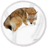 Round Beach Towel featuring the photograph Spot On by Steve McKinzie