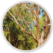 Round Beach Towel featuring the photograph Spot The Koala, Yanchep National Park by Dave Catley