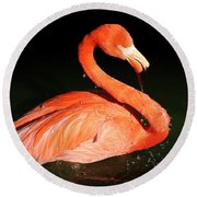 Spotlight On A Bathing Flamingo Round Beach Towel